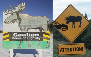 9. Moose crossing on highway