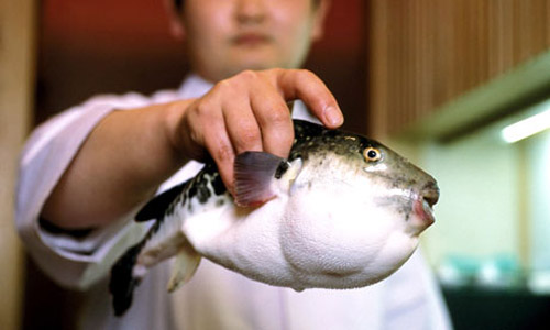 1.Fugu or the Pufferfish