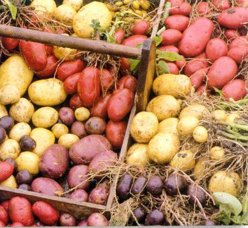 7. Potatoes