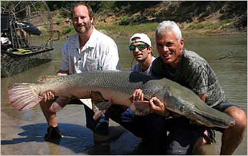2. Alligator Gar