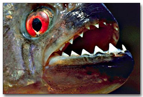 5. Amazon Flesh Eater