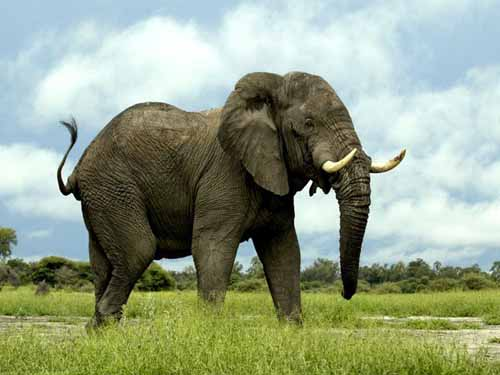 2. Elephants