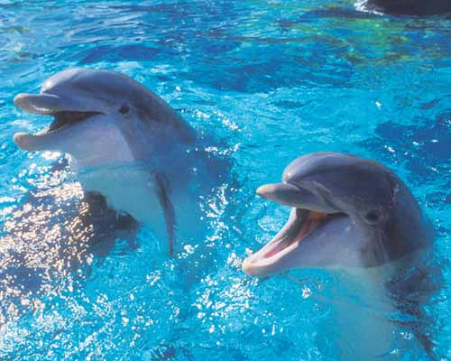3. Dolphins