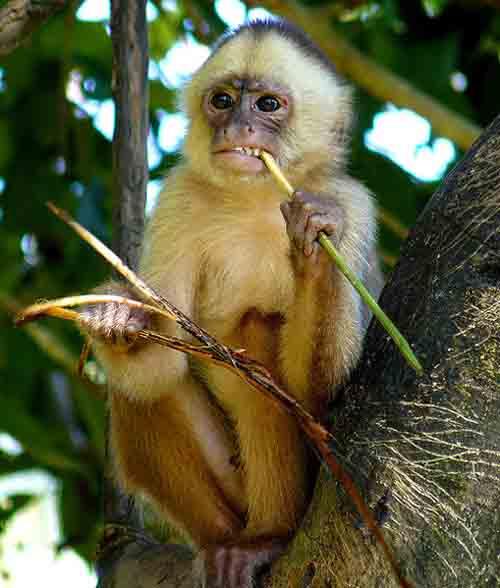 5. Monkeys