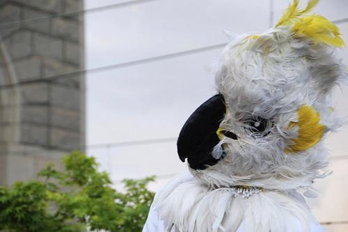 7. Cacadu Parrot