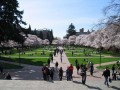 university of washington-1