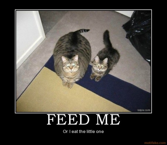 Image result for Food cats milk demotivational poster