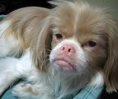 Top 10 Ugliest Dogs